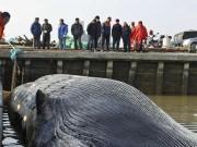 Thế giới - Xác cá voi 20 tấn không đầu, không vây dạt cảng TQ