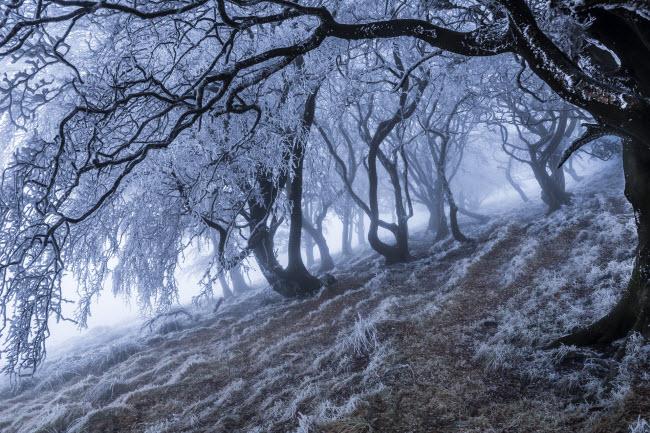 Anh quốc có nhiều khu rừng đẹp và ấn tượng nhất là rừng tại Pennines ở Anh.