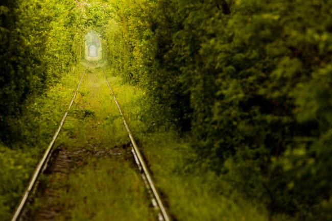 Đường ray tàu hỏa bỏ hoang này nằm trong rừng gần thành phố Caransebes, Romania. Du khách và người dân địa phương gọi đây là Đường hầm tình yêu vì vẻ lãng mạn của nó.
