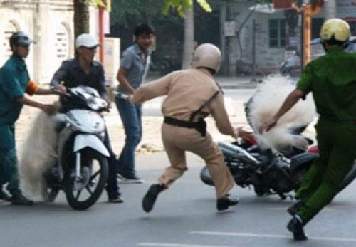 """CSGT Thanh Hóa lại dùng súng bắn lưới bắt """"quái xế"""" - 1"""