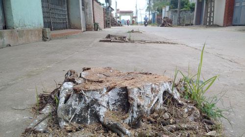 Vụ dẹp vỉa hè, chặt luôn cây xanh: Yêu cầu trồng lại toàn bộ - 1