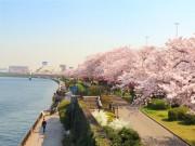 Vi vu ở Quần thể Tokyo Skytree Town & thưởng thức các món ngon