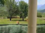 Thế giới - Mexico: Sư tử bất ngờ nhảy qua hào sâu tấn công du khách