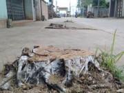 Tin tức trong ngày - Hà Nội ra công văn cấm tự ý chặt cây khi dẹp vỉa hè