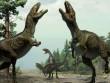 Tìm ra dấu chân khủng long nhiều chưa từng thấy ở Úc