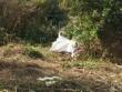 Phát hiện thi thể bị trói tay, chân nhét trong bao tải