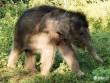 Lần đầu tiên nuôi sống voi mồ côi tại Tây Nguyên
