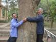 """Cận cảnh """"cụ"""" sưa 400 tuổi được đại gia gỗ săn đón ở Bắc Ninh"""
