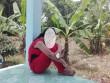 Khởi tố vụ bé 10 tuổi bị xâm hại có thai ở Vĩnh Long