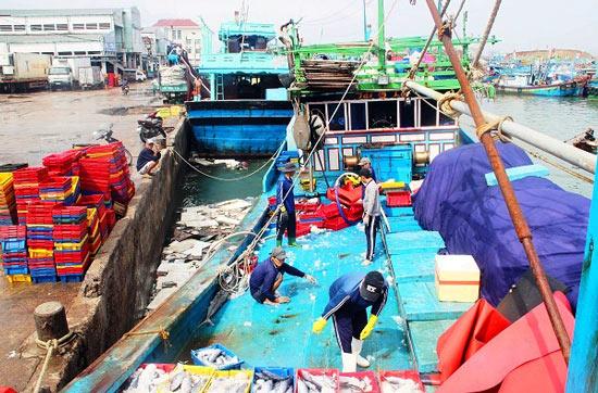 Đầu năm, ngư gia Bình Định trúng đậm cá ngừ sọc dưa thu bay tiền tỷ - 1