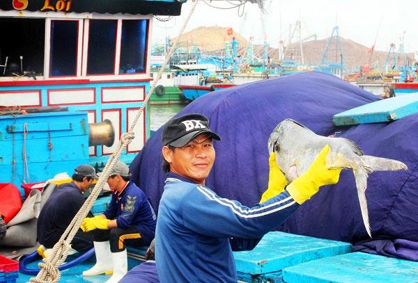 Đầu năm, ngư gia Bình Định trúng đậm cá ngừ sọc dưa thu bay tiền tỷ - 2