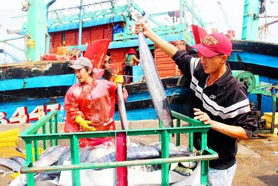 Đầu năm, ngư gia Bình Định trúng đậm cá ngừ sọc dưa thu bay tiền tỷ - 5