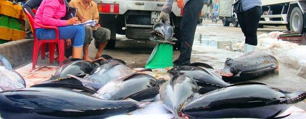 Đầu năm, ngư gia Bình Định trúng đậm cá ngừ sọc dưa thu bay tiền tỷ - 6