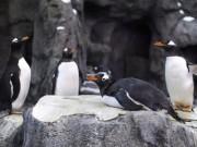 Thế giới - Quốc gia đang lạnh đến nỗi chim cánh cụt cũng không sống nổi