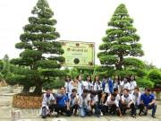 Thị trường - Tiêu dùng - Hai cây me cổ nhất Việt Nam, 150 tuổi giá 6 tỷ, chủ vẫn chưa bán