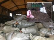 Đã thu gom được hơn 3 tấn đầu đạn sau vụ nổ ở Bắc Ninh