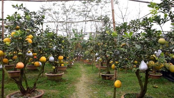Clip: Độc đáo lượng có 10 loại trái với chín rộ ra cơ hội Tết - 10