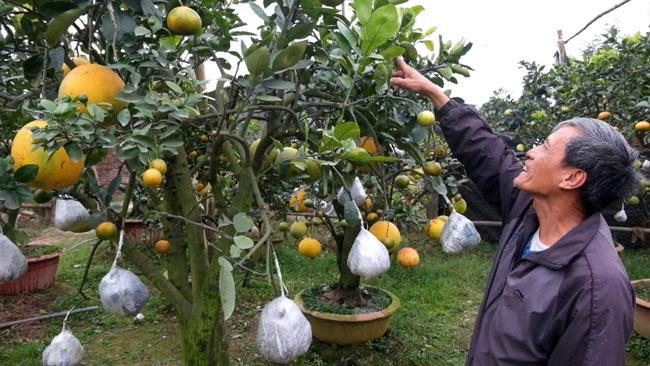 Clip: Độc đáo lượng có 10 loại trái với chín rộ ra cơ hội Tết - 4