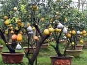 Thị trường - Tiêu dùng - Clip: Độc đáo cây có 10 loại quả cùng chín rộ vào dịp Tết