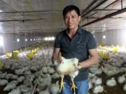 Thị trường - Tiêu dùng - Thu lãi tiền tỷ nhờ nuôi gà theo công nghệ khép kín