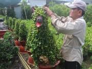 Thị trường - Tiêu dùng - Kiểng hình chú chó lạ mắt giá 4 triệu hút hàng mùa Tết