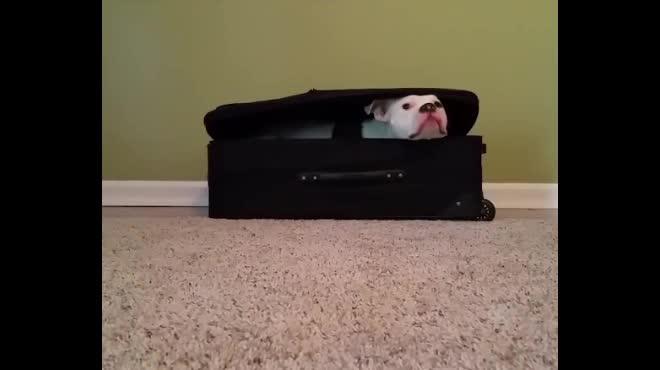 Khi boss nghe tin mình sắp được đi du lịch