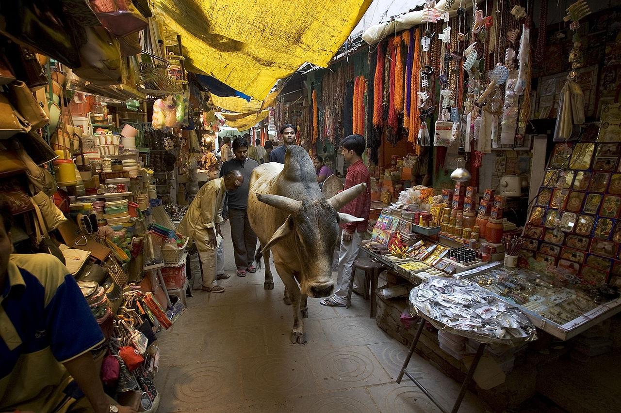 13 lý do khiến bạn nên đến Ấn Độ vào năm 2018 - 4