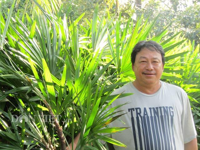 Trồng cây bán Tết: Trồng cây Mật cật, tất bật bán cả lá lẫn cây - 2