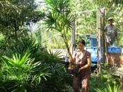 Thị trường - Tiêu dùng - Trồng cây bán Tết: Trồng cây Mật cật, tất bật bán cả lá lẫn cây