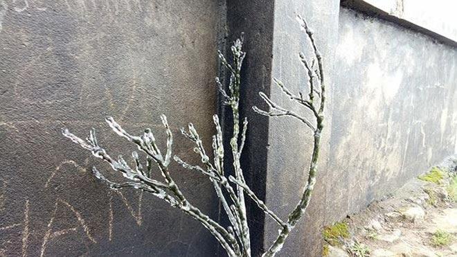 Lạnh âm 0,3 độ C, Mẫu Sơn xuất hiện băng tuyết phủ trắng - 5