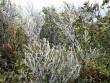 Lạnh âm 0,3 độ C, Mẫu Sơn xuất hiện băng tuyết phủ trắng