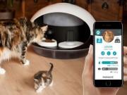 """Máy cho thú cưng ăn thông minh gây  """" sốt """"  tại CES 2018"""