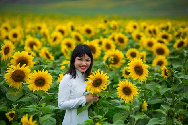 Tới xứ Nghệ ghé thăm cánh đồng hoa hướng dương miễn phí tham quan - 7