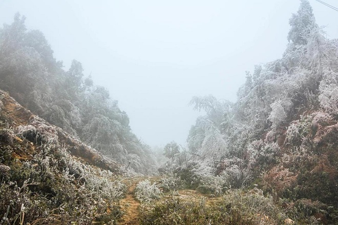 Rét khủng khiếp, cây cối hóa đá trên đỉnh Mù Cang Chải - 2