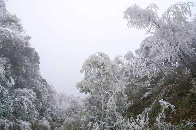 Rét khủng khiếp, cây cối hóa đá trên đỉnh Mù Cang Chải - 7