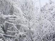 Tin tức trong ngày - Rét khủng khiếp, cây cối hóa đá trên đỉnh Mù Cang Chải