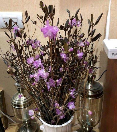 """Xuất hiện loài hoa mới """"đỗ quyên ngủ đông"""" khiến chợ hoa Tết """"lên cơn sốt"""" - 2"""