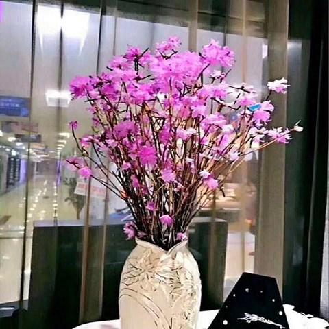 """Xuất hiện loài hoa mới """"đỗ quyên ngủ đông"""" khiến chợ hoa Tết """"lên cơn sốt"""" - 4"""