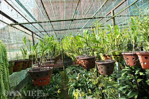 """""""Lạc"""" vào vườn phong lan đặc hữu độc, lạ của lão nông Đà Lạt - 1"""