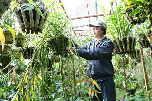 """""""Lạc"""" vào vườn phong lan đặc hữu độc, lạ của lão nông Đà Lạt - 4"""