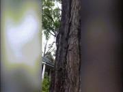 Thả sóc bị thương về cây, sốc với điều xảy ra 18 giây sau