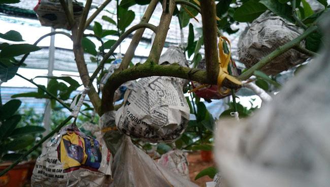 """Phật thó bonsai ví bạc triệu có nguy cơ """"cháy hàng"""" trước Tết - 10"""