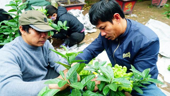 """Phật thó bonsai ví bạc triệu có nguy cơ """"cháy hàng"""" trước Tết - 4"""