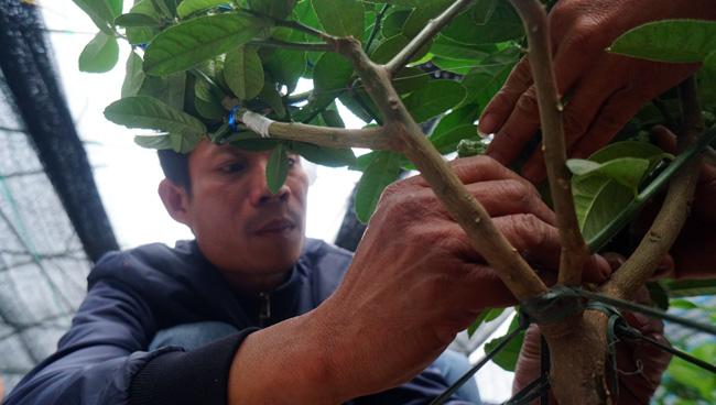 """Phật thó bonsai ví bạc triệu có nguy cơ """"cháy hàng"""" trước Tết - 8"""