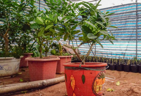 """Phật thó bonsai ví bạc triệu có nguy cơ """"cháy hàng"""" trước Tết - 9"""