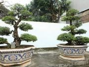 Ngắm cặp khế hơn 400 năm tuổi được cho là của vua Gia Long