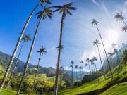 """Lạc vào  """" chốn thần tiên """"  có những cây dừa cao nhất thế giới"""