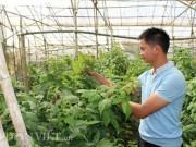"""Bỏ lương 7 triệu, về quê trồng  """" siêu thực phẩm """" , thu gần 1 tỷ"""