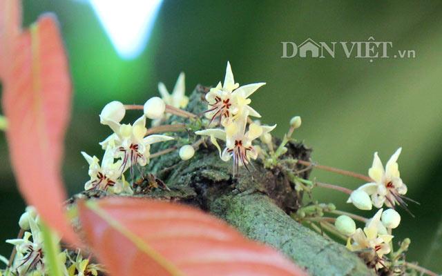 Ngỡ nghìng trước vườn lượng tỷ đô có hoa nở khắp cơ thể - 1
