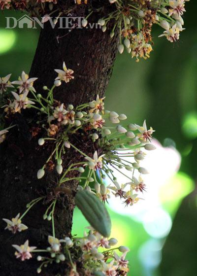 Ngỡ nghìng trước vườn lượng tỷ đô có hoa nở khắp cơ thể - 2